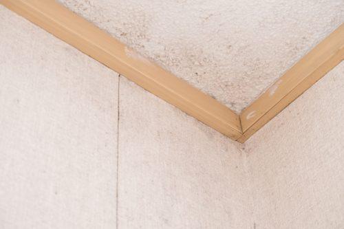 カビた天井